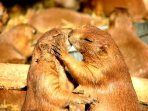 Животные тоже целуются