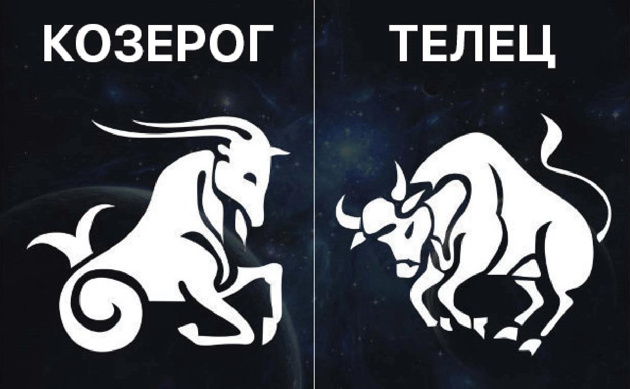 Козерог и Телец – надежная совместимость